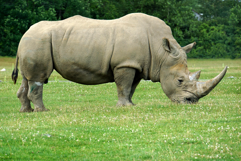 Fotos de animales en zoologicos 45