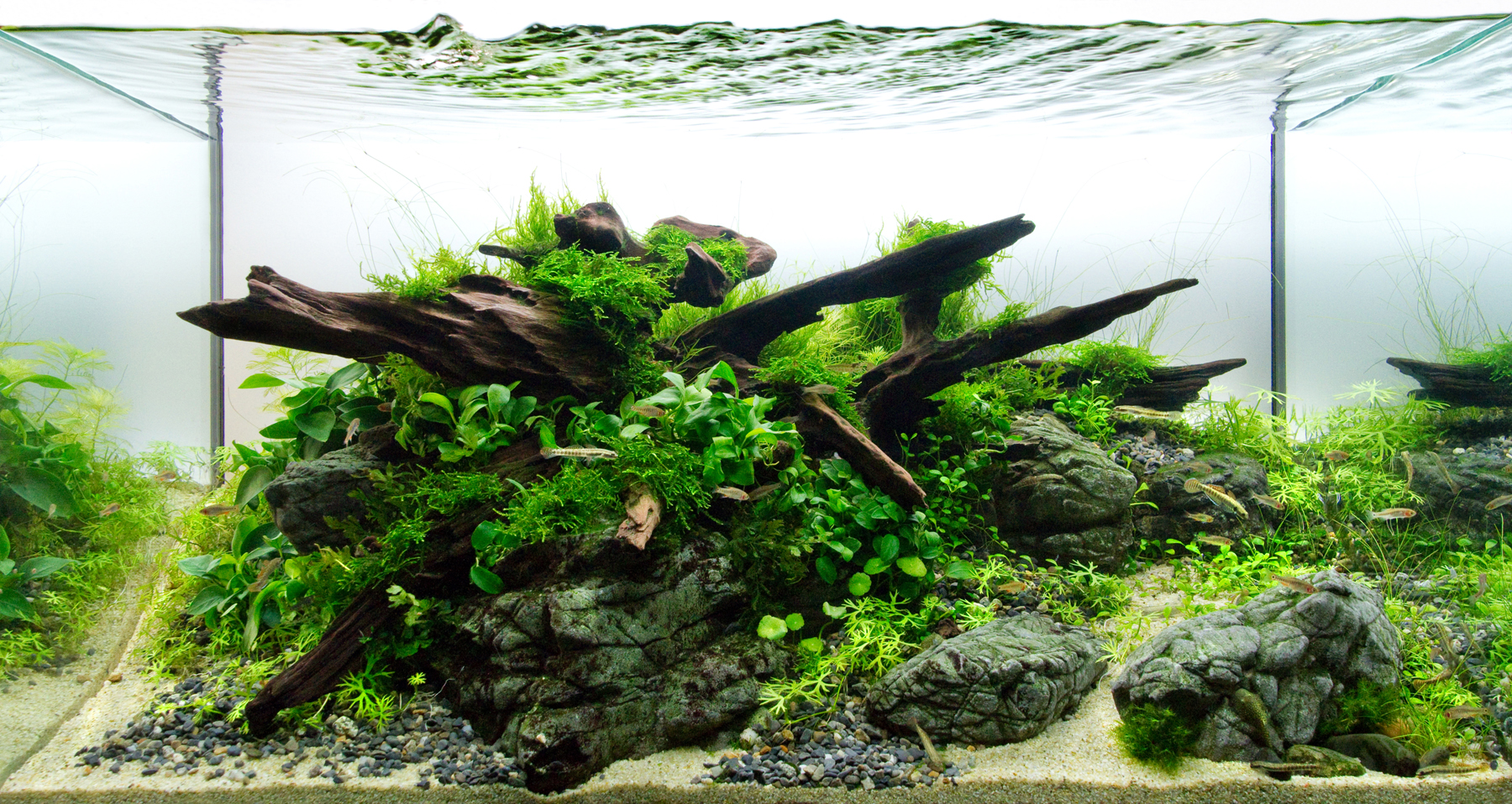 Aquascape With Rocks And Wood