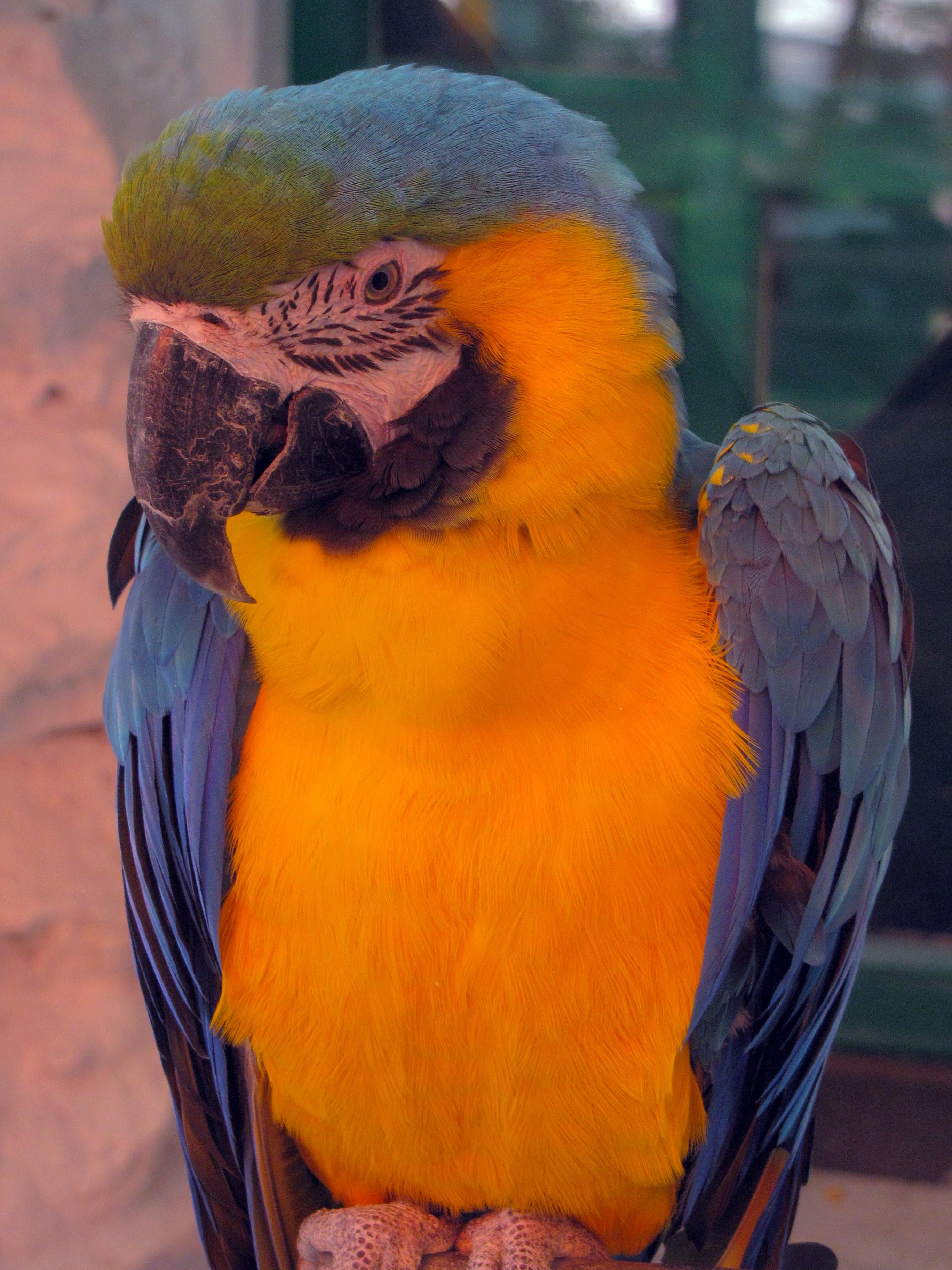 bilder von papageien - malvorlagen gratis