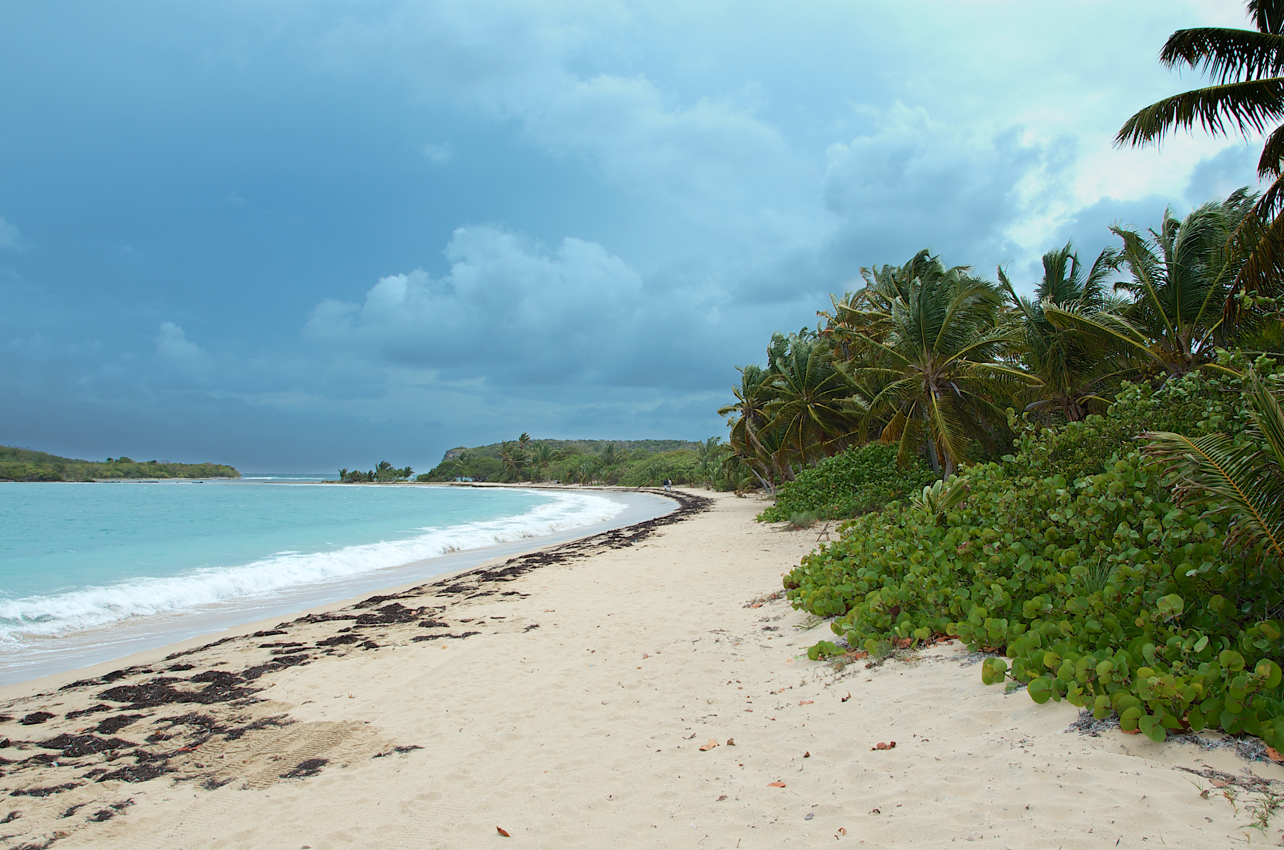 Image result for Vieques, Puerto Rico