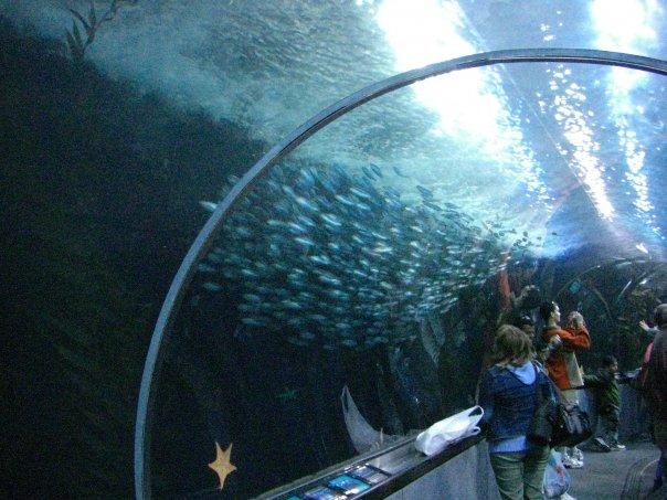 File San Francisco Bay Aquarium 2011 Wikimedia