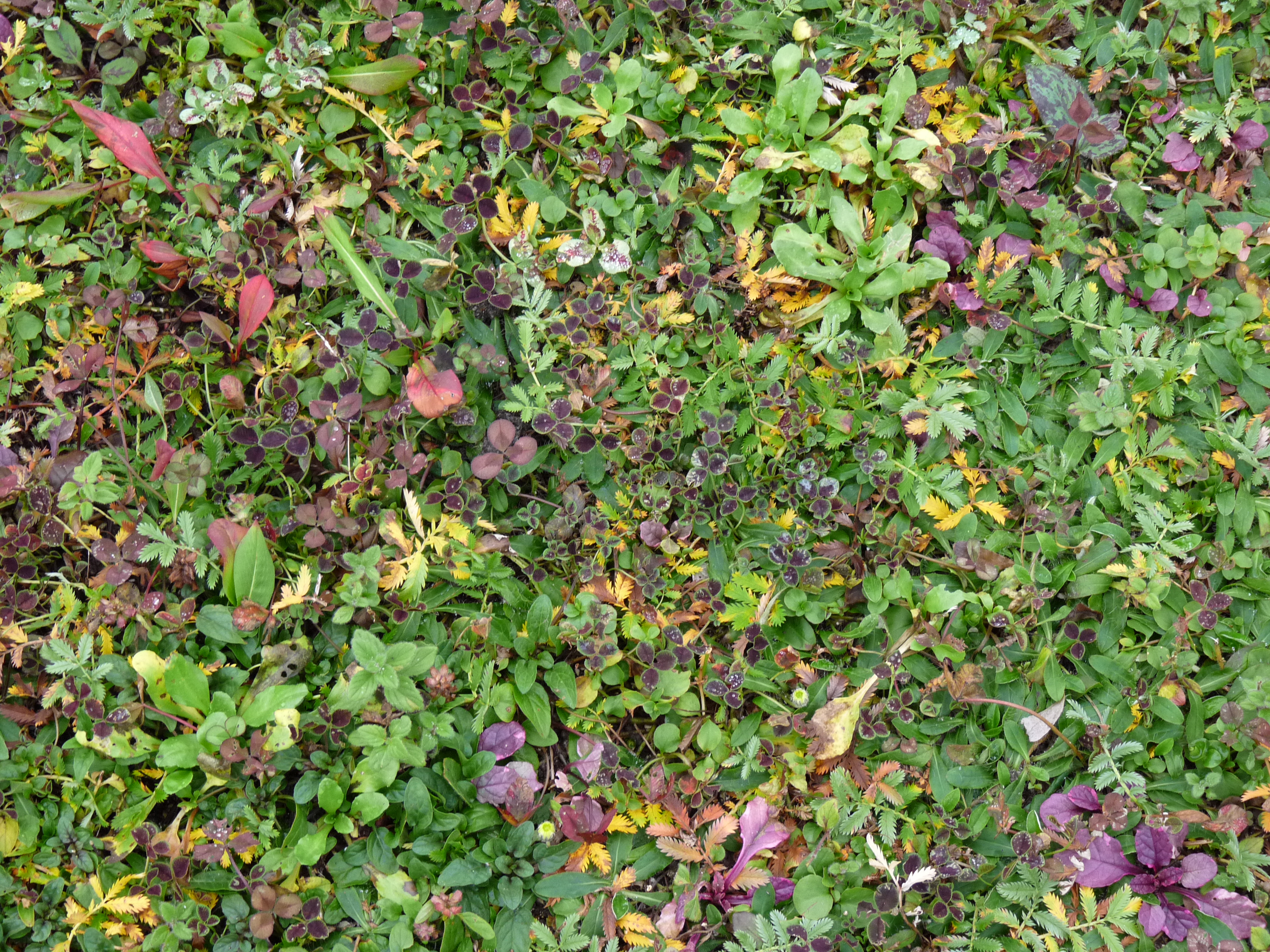 tapestry lawn mixed autumnal foliage.jpg