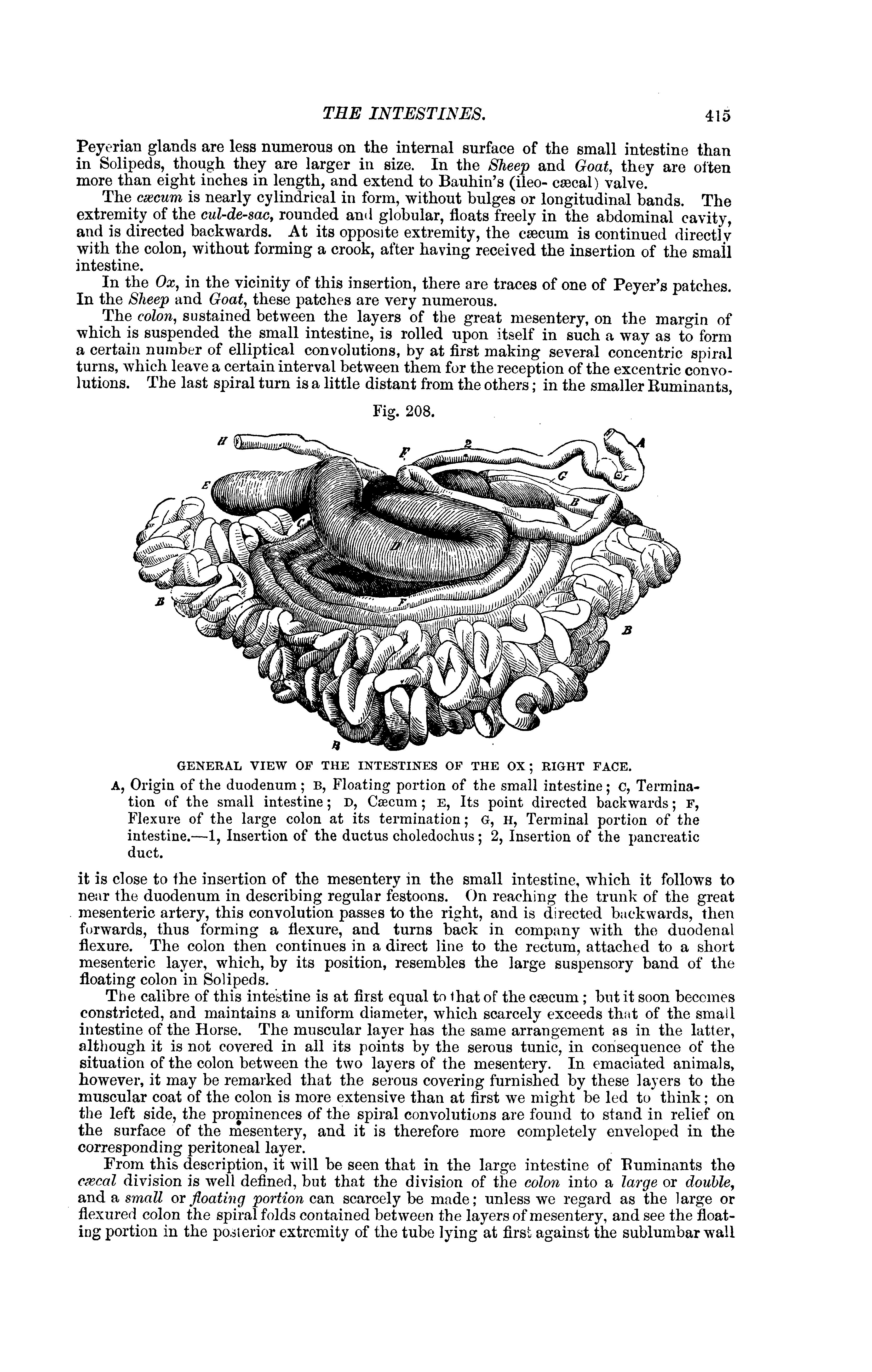 Filethe Comparative Anatomy Of The Domesticated Animals 1873