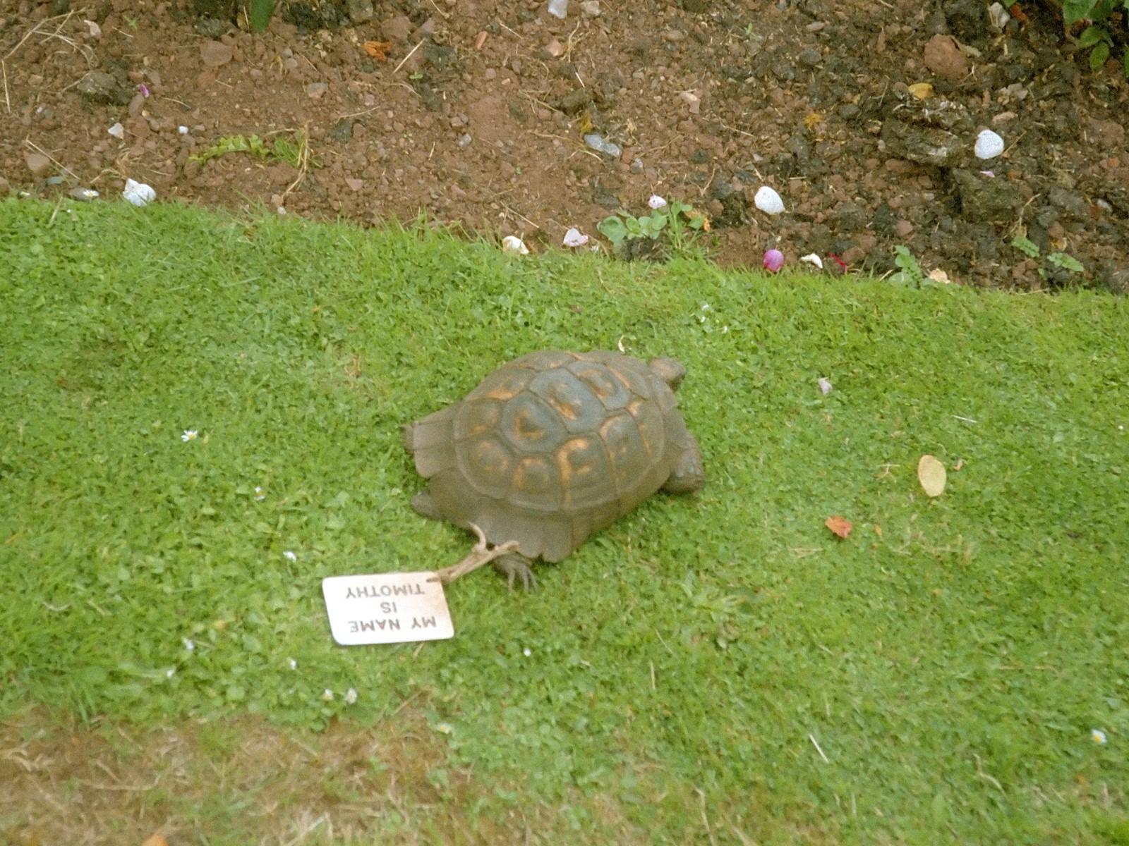 Timothy the Tortoise. Berühmte Schildkröten auf Villa Amanda der Schildkrötenblog
