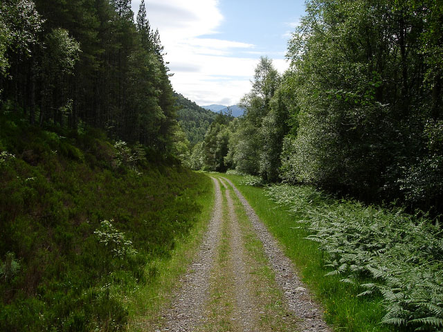 Track through the Forest - geograph.org.uk - 1088557