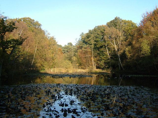 Upper Pond, Burnham Beeches - geograph.org.uk - 591146