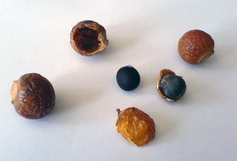 http://upload.wikimedia.org/wikipedia/commons/3/3a/Waschnuesse.jpg