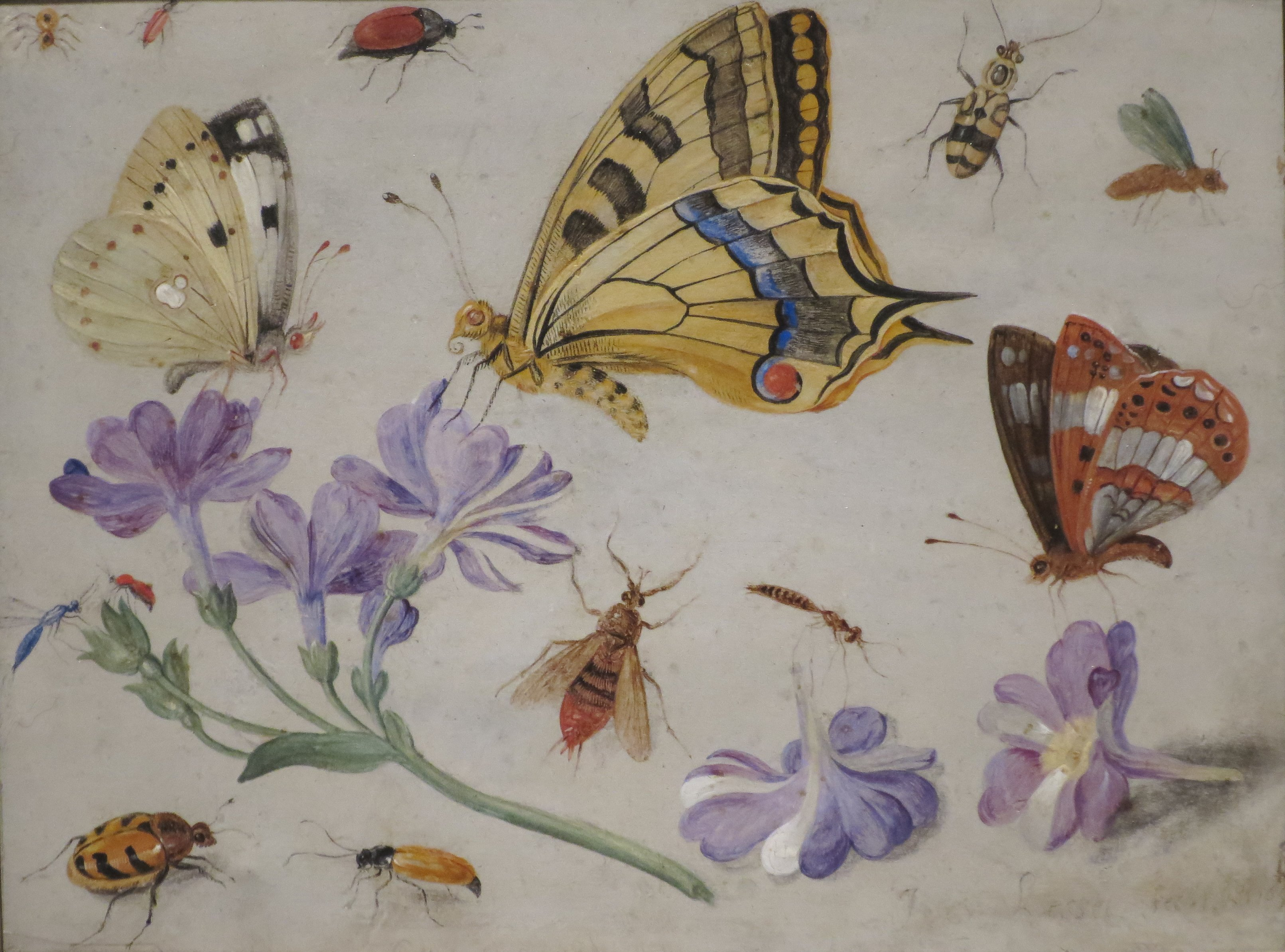 File:\'Butterflies, Other Insects, and Flowers\' by Jan van Kessel ...