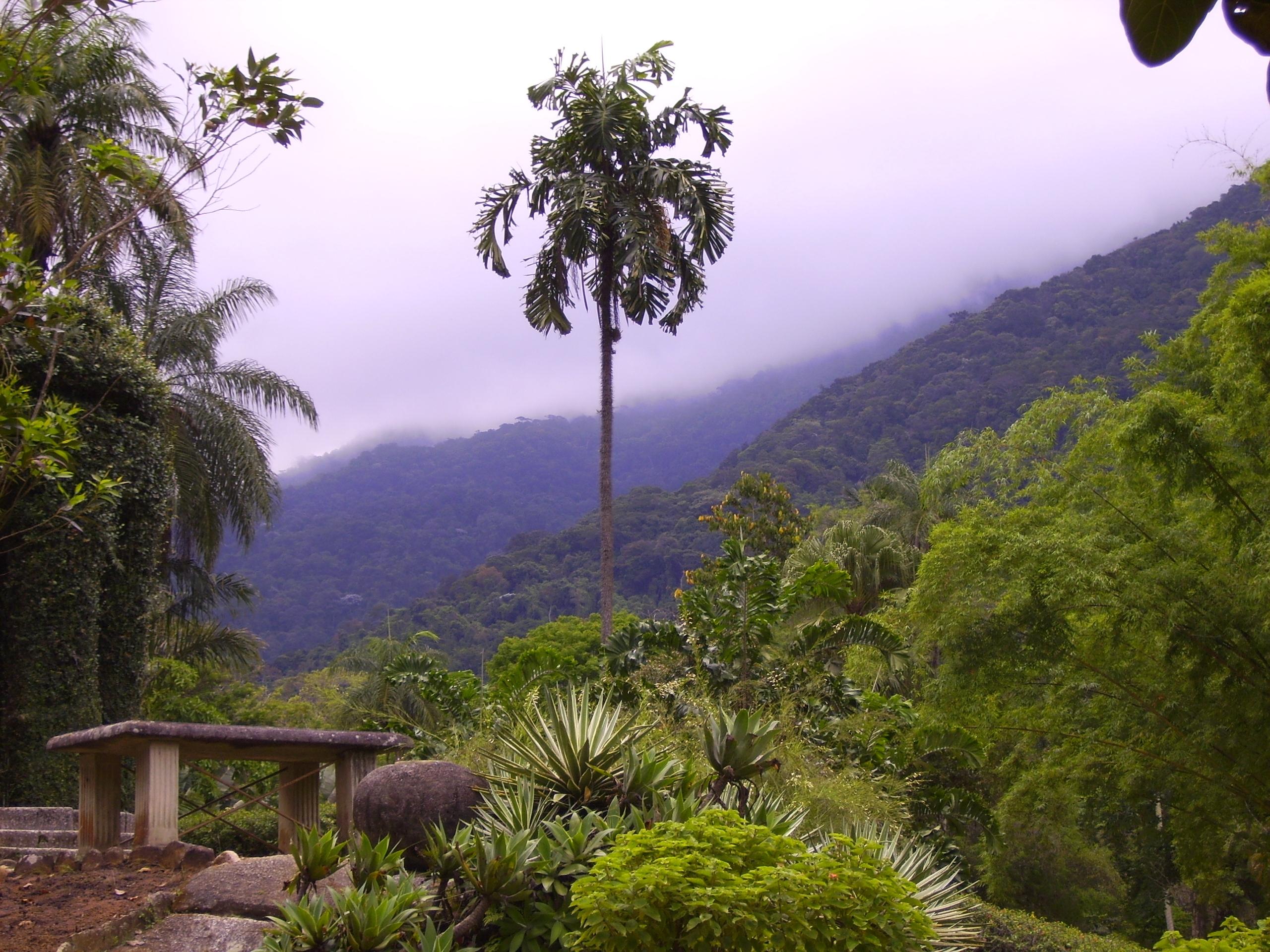 banco de jardim rio de janeiro:Jardim Botanico Rio De Janeiro Brazil #515916 2560x1920