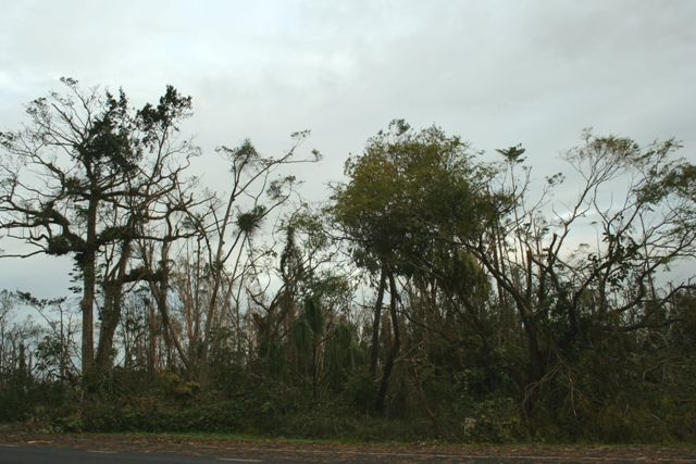 Dunk Island Holidays: File:After-cyclone-larry-tropical-rainforest-devastated