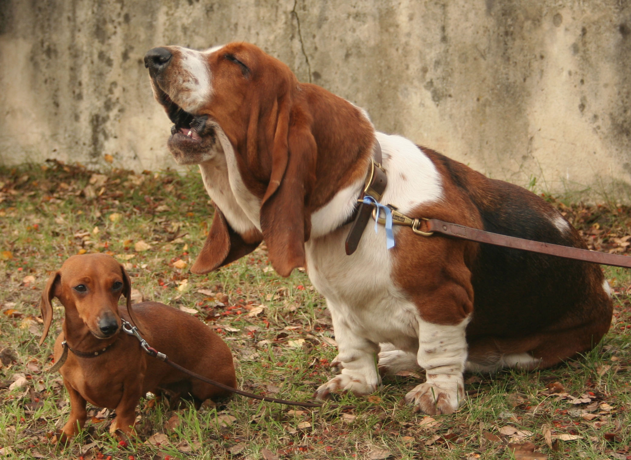 Image Result For Training Old Dogs