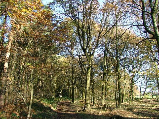 Deffer Wood - geograph.org.uk - 284884