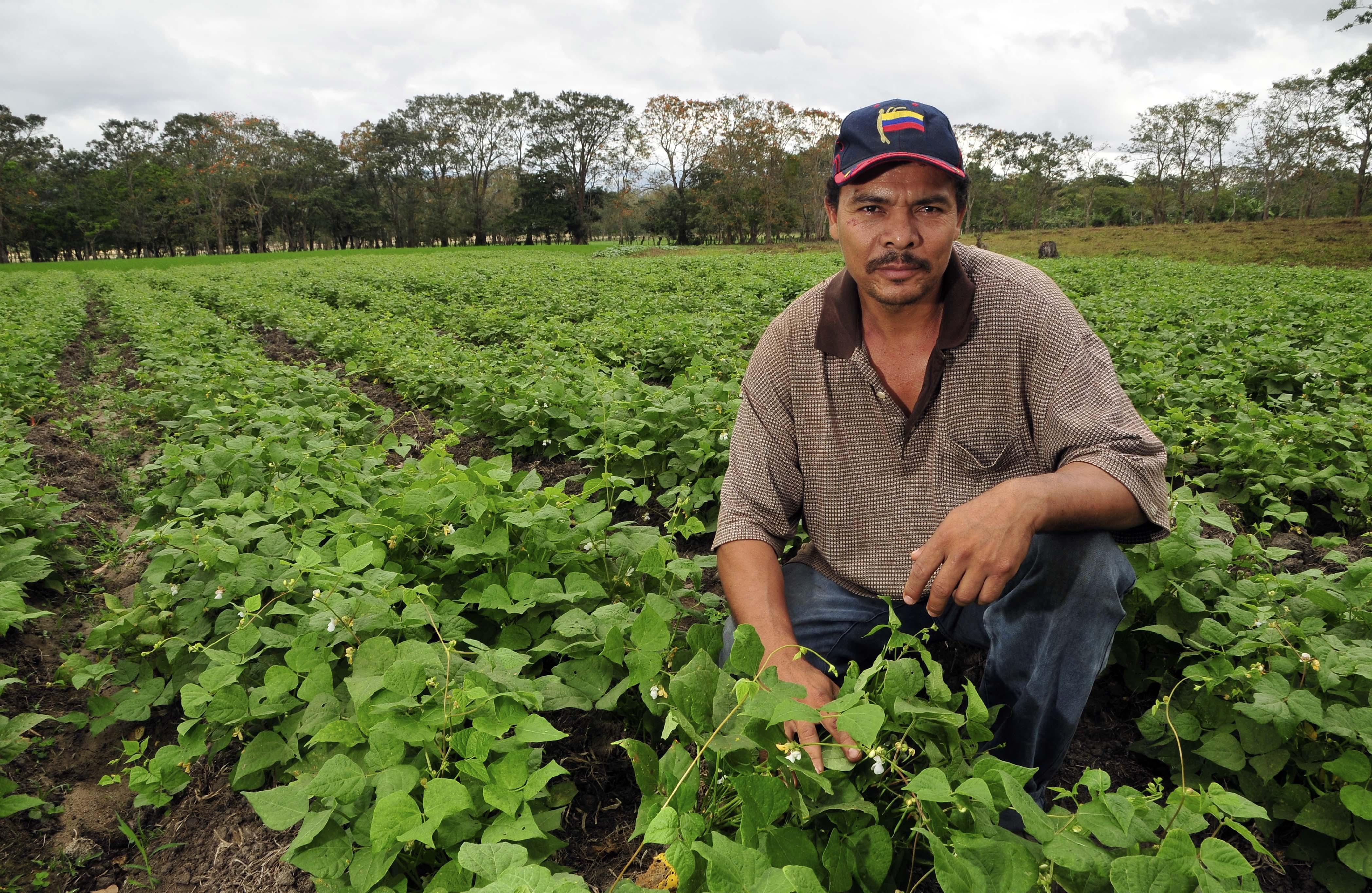 Farmer File:farmer in bean field,