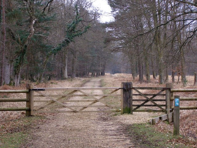 Gateway to Burley New Inclosure, New Forest - geograph.org.uk - 341859