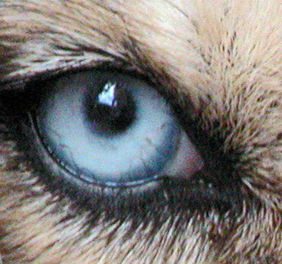 Dogs Eye Is Watery And Closed