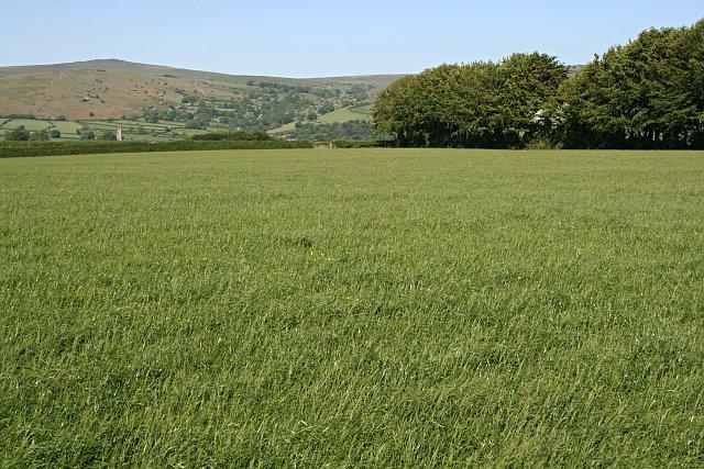 File:Grass Field - geograph.org.uk - 183289.jpg ...