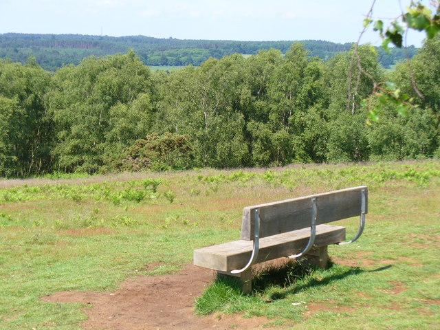 Hillside on Puttenham Common - geograph.org.uk - 453915