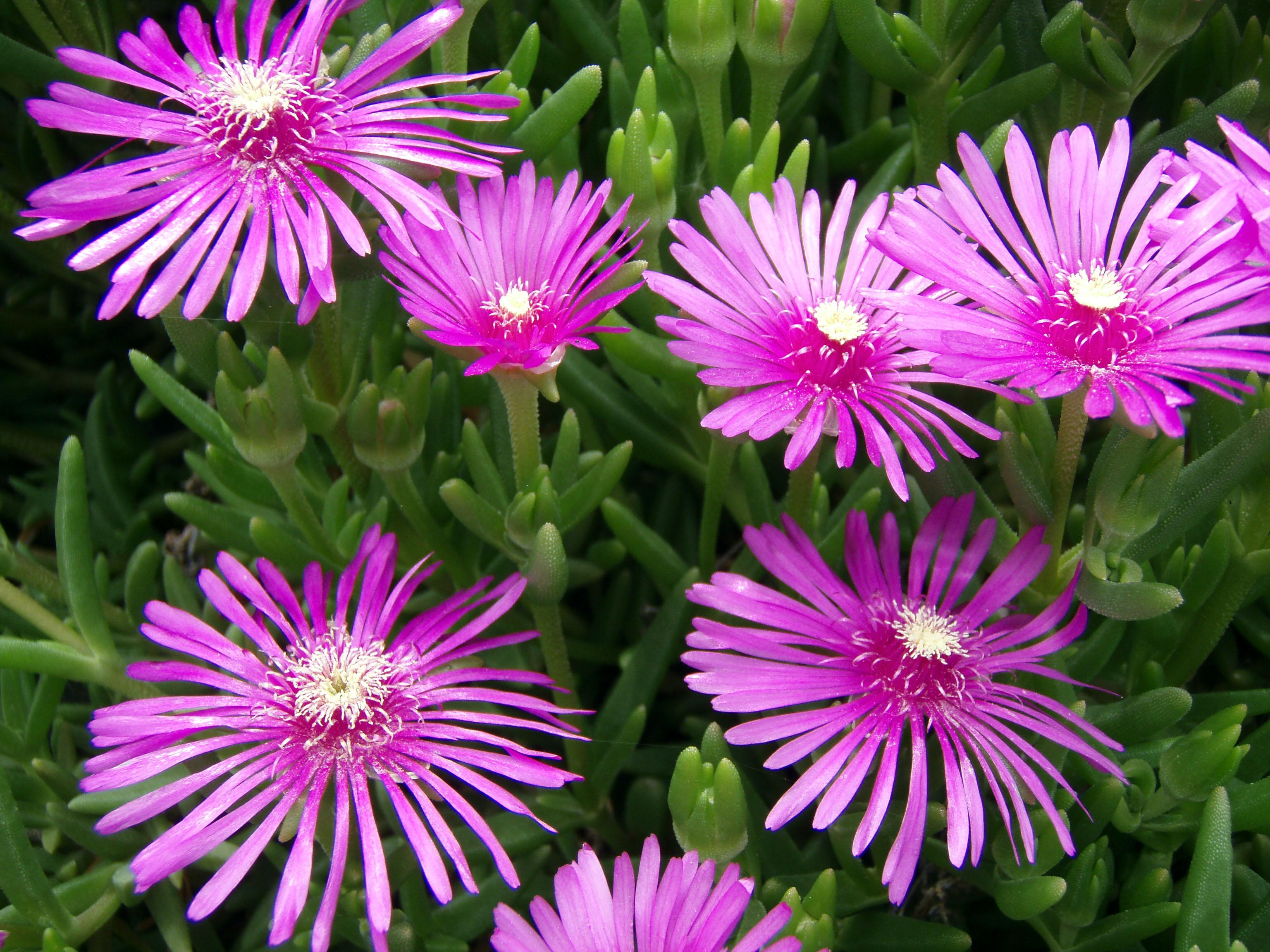 「菊の花」の画像検索結果