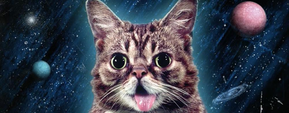 lil bub - photo #15