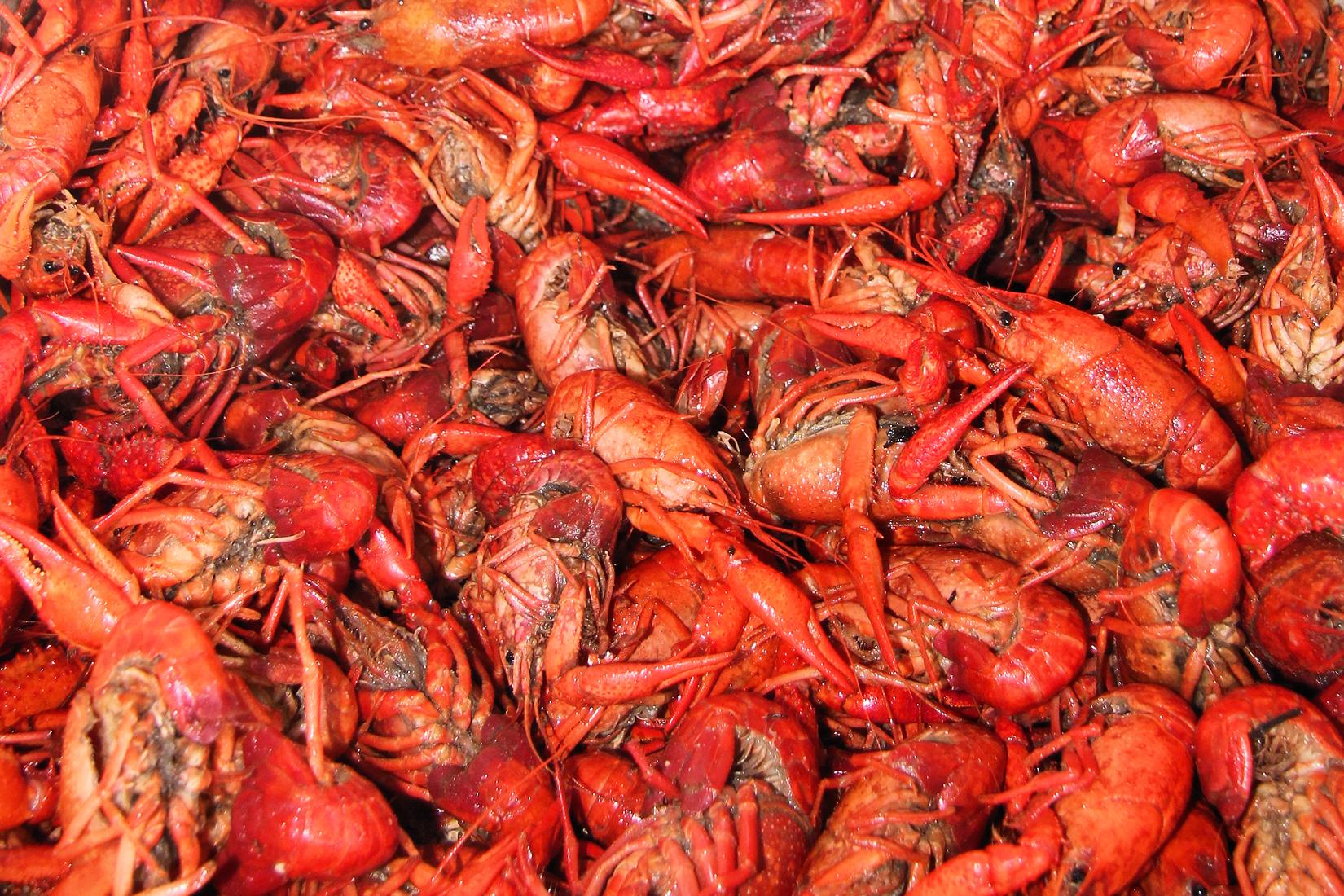 Crawfish season dates in Brisbane