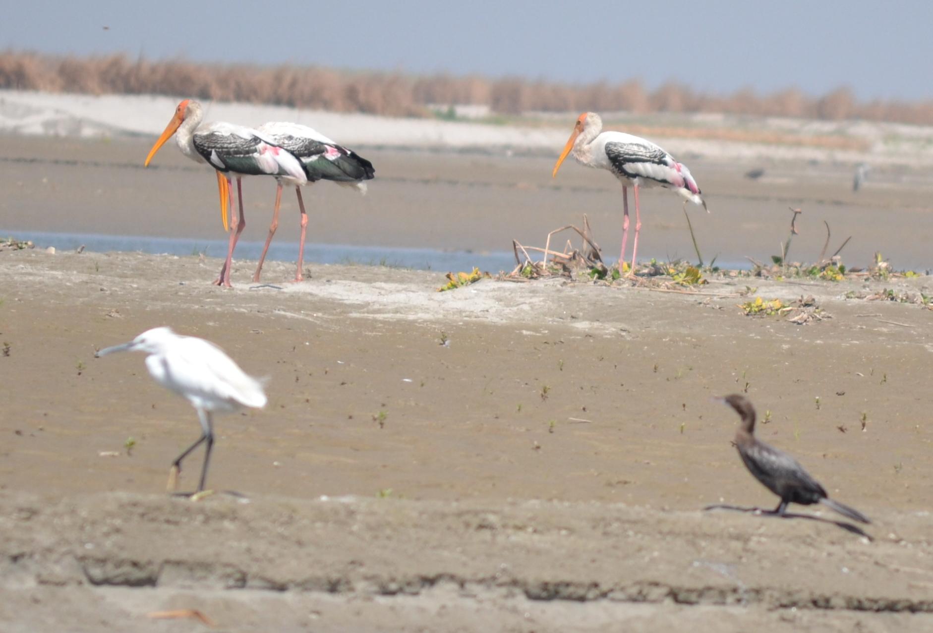 Image result for migratory birds