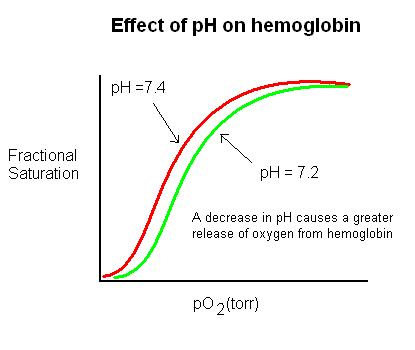 PH on hemoglobin.JPG