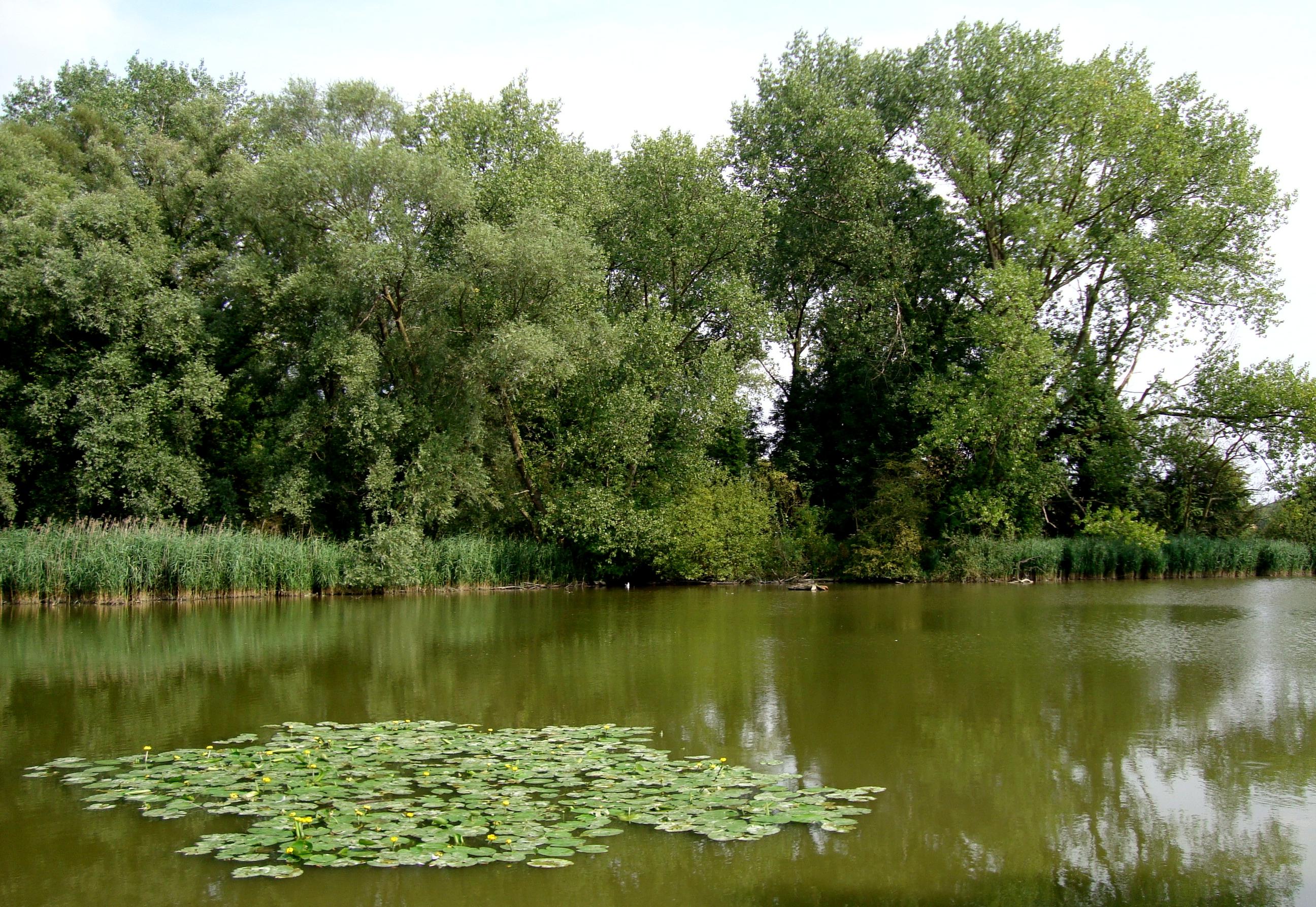File:Parc de la deule wavrin marais.JPG - Wikimedia Commons