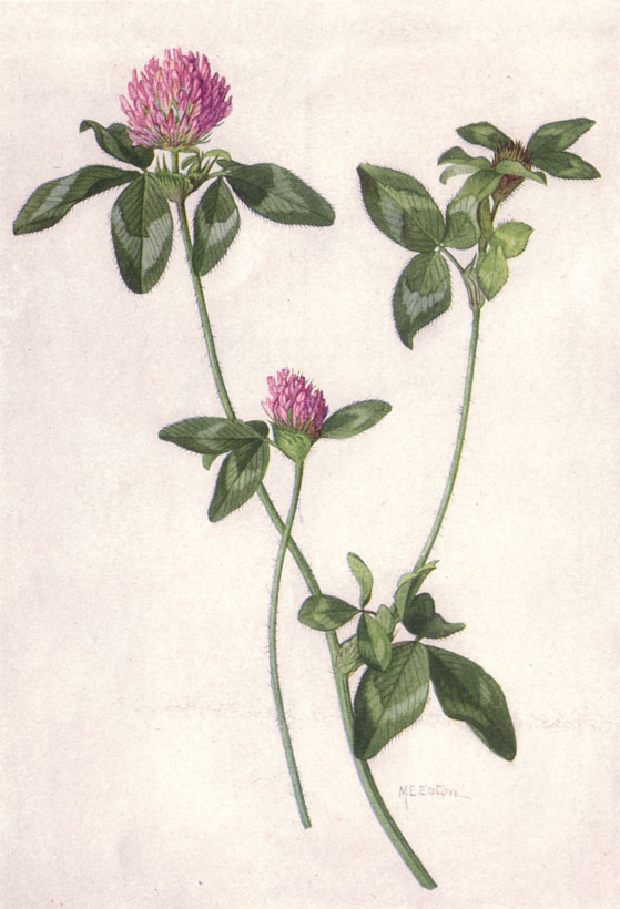 Image Result For Botanical Coloring Pages