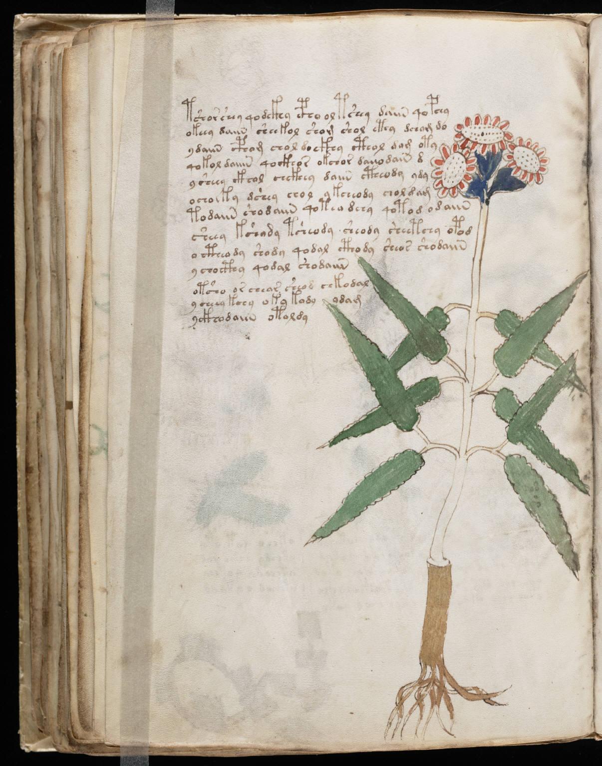 Voynich Manuscript %28106%29 ヴォイニッチ手稿(写本) どの言語にも属さない謎の文字!