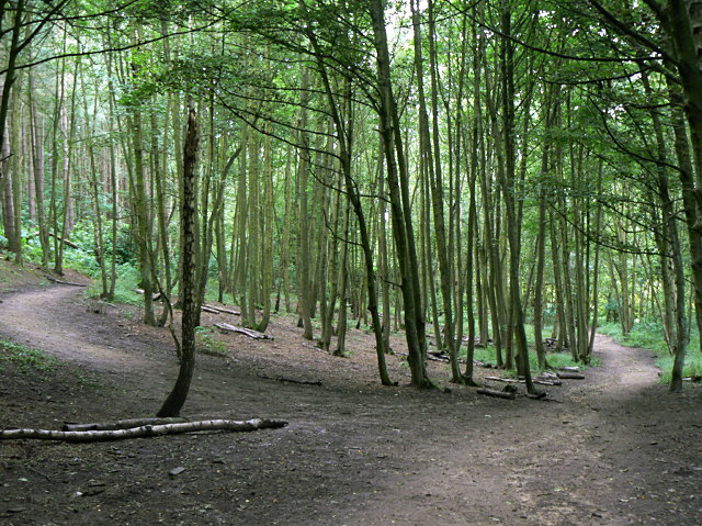 Woodland in Burntstump Country Park - geograph.org.uk - 1428416