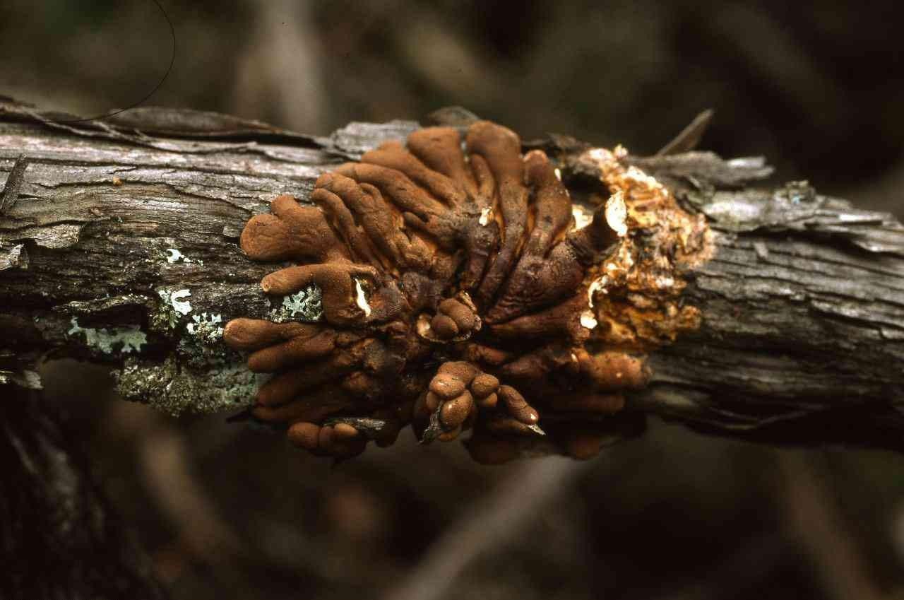 Weird Finger-Like Fungus