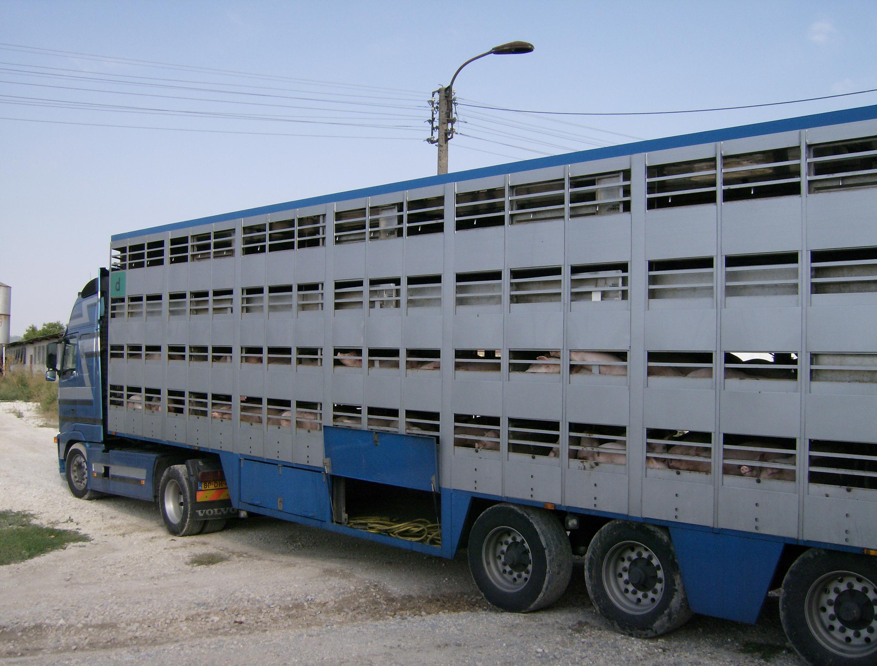 File Animal Transport 1 Jpg Wikimedia Commons