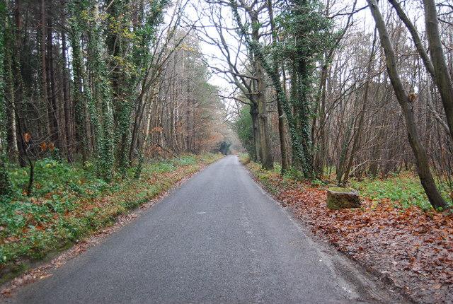 Byway through Pembury Woods - geograph.org.uk - 1065308