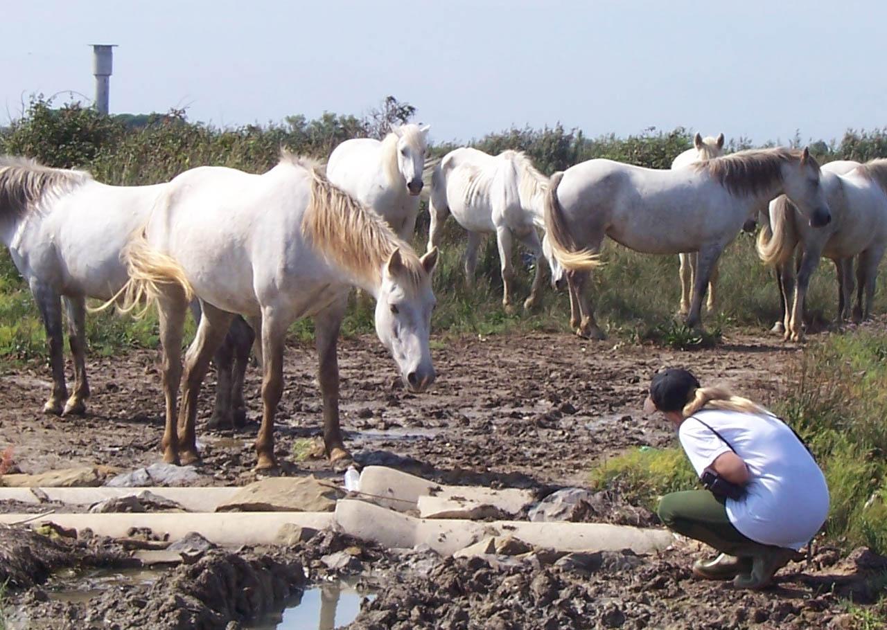 The Horse Whisperer Book Pdf