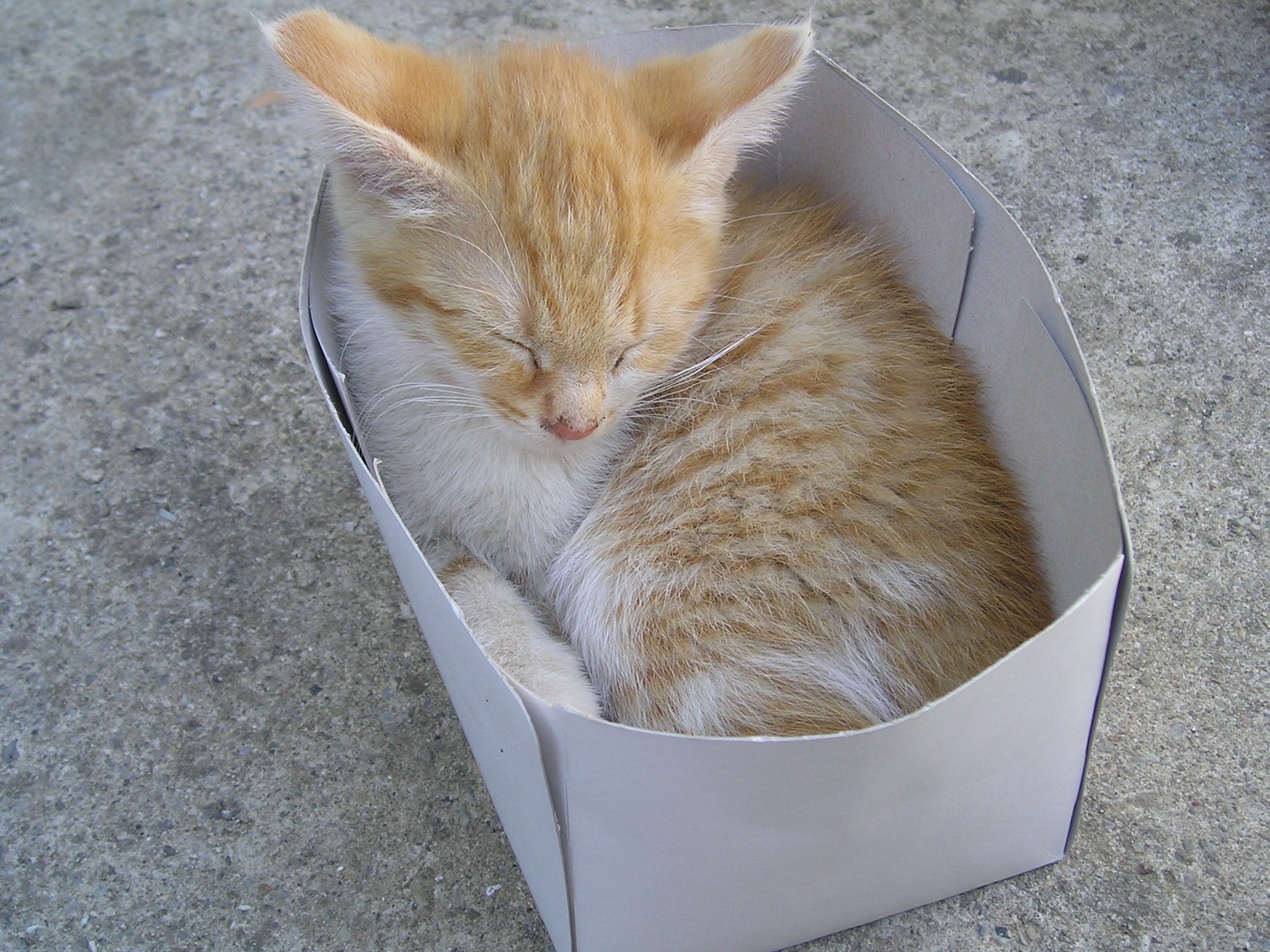 Gattilicious  =^.^= Cat_into_the_box