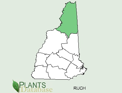 File:Cloudberry distribution New Hampshire.png