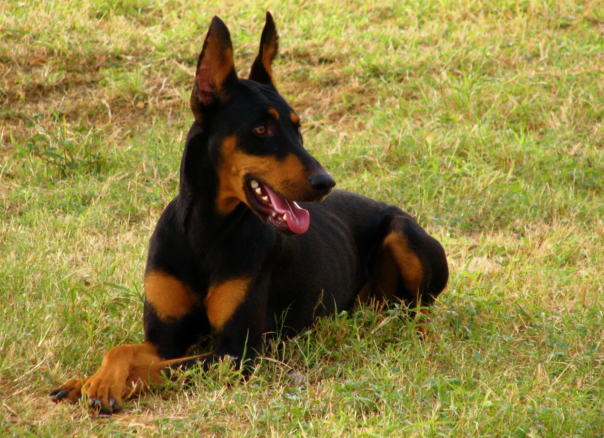 Best Natural Dog Food For Large Dogs