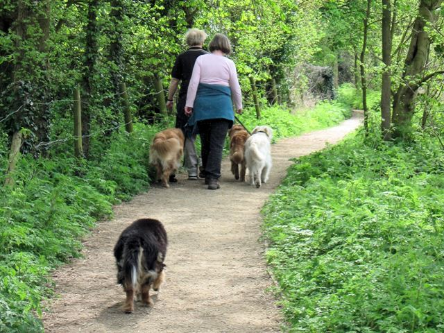 Dog Walking at Tringford Reservoir - geograph.org.uk - 1419270