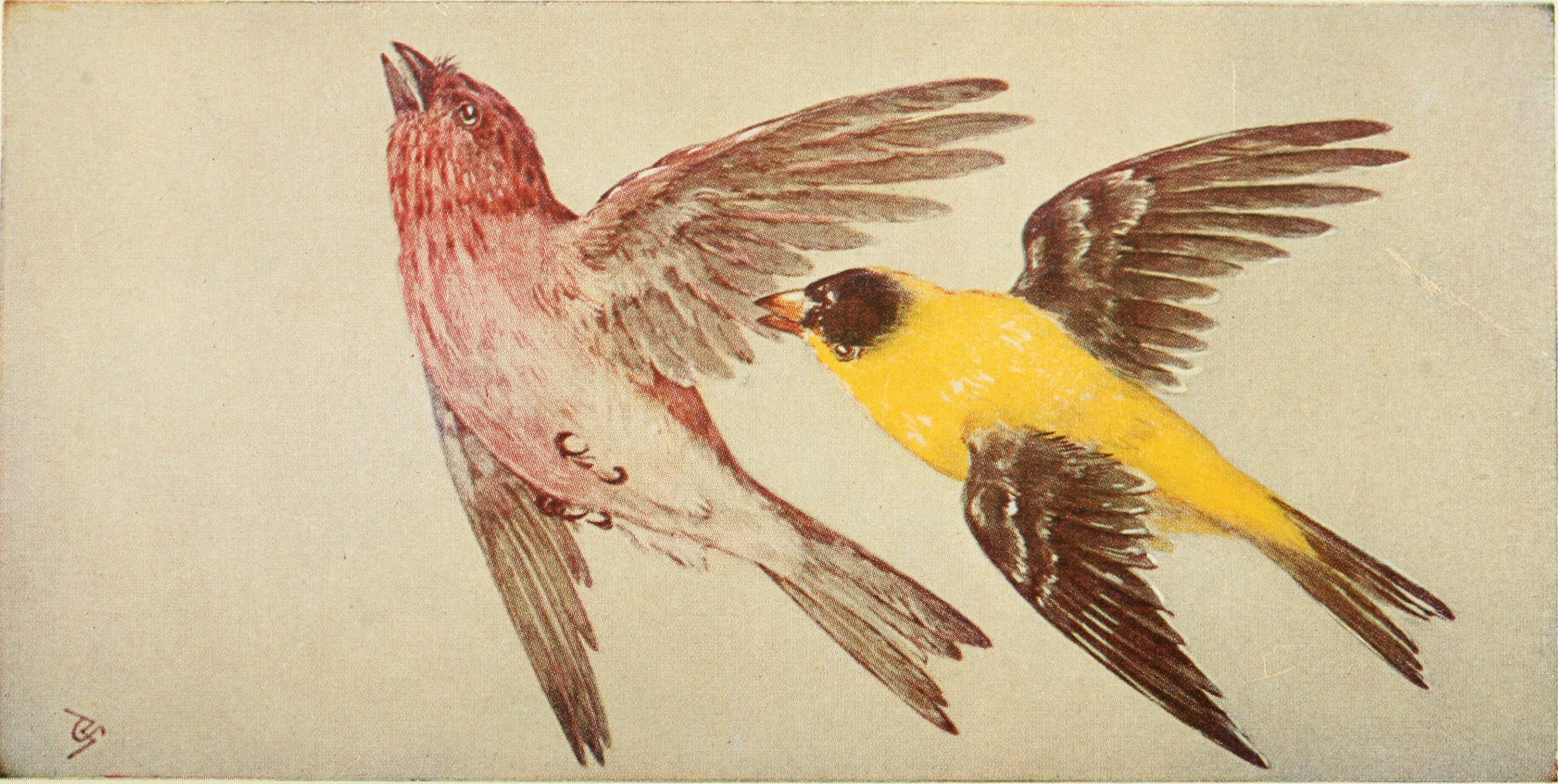 File:Field book of wild birds and their music