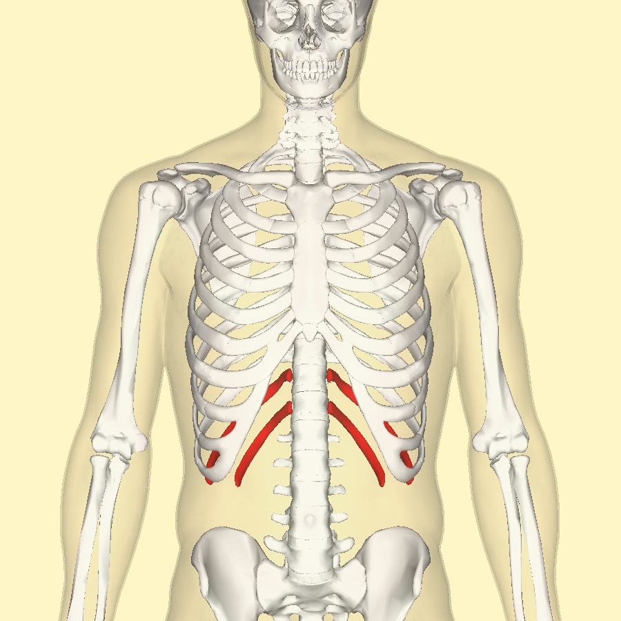 File:Floating ribs frontal.png - Wikimedia Commons