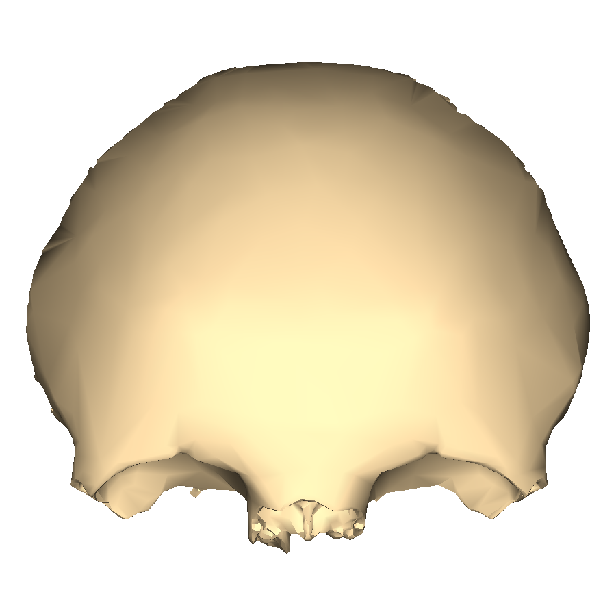 Filefrontal Bone Close Up Anteriorg Wikimedia Commons