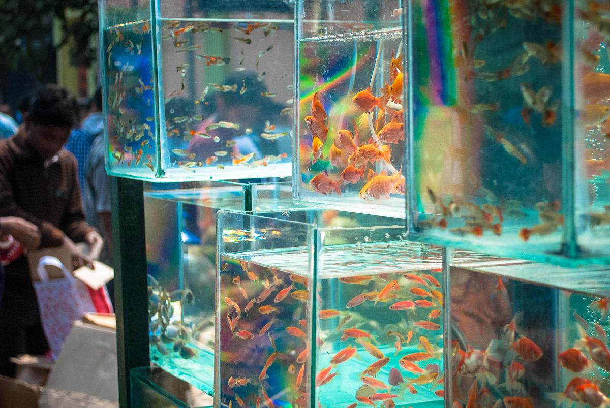 Fish for aquarium in kolkata - Galiff_street_bird_market2 Jpg