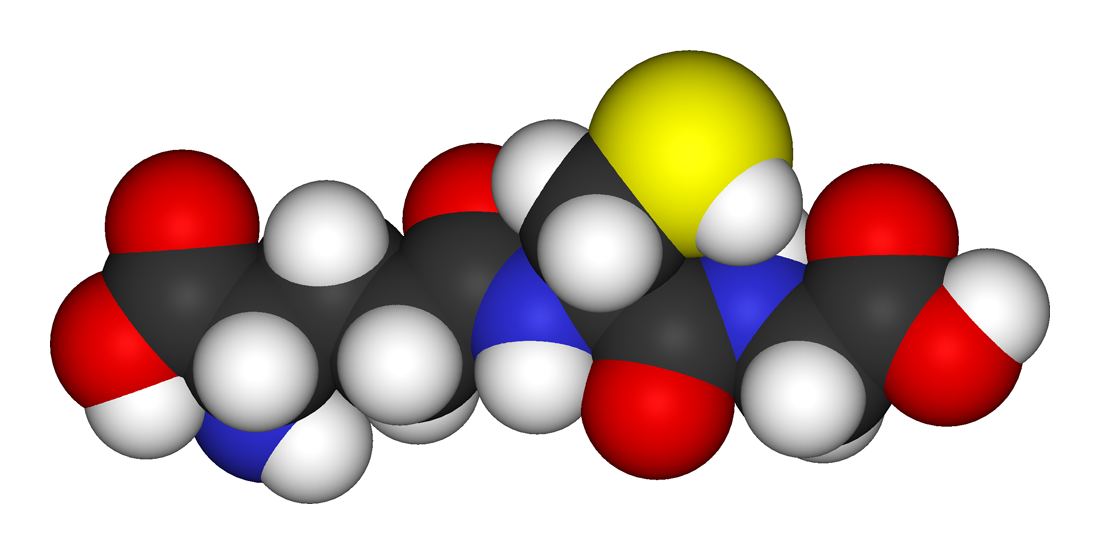 Model of the antioxidant metabolite glutathione. The yellow sphere is the redox-active sulfur atom that provides antioxidant activity, while the red, blue, white, and dark grey spheres represent oxygen, nitrogen, hydrogen, and carbon atoms, respectively.