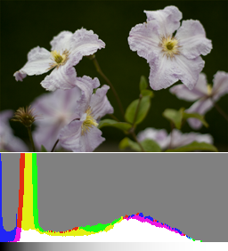 A normally exposed image and its histogram. Details in the flowers are already discernible but recovering the shadows in post-production will increase noise.