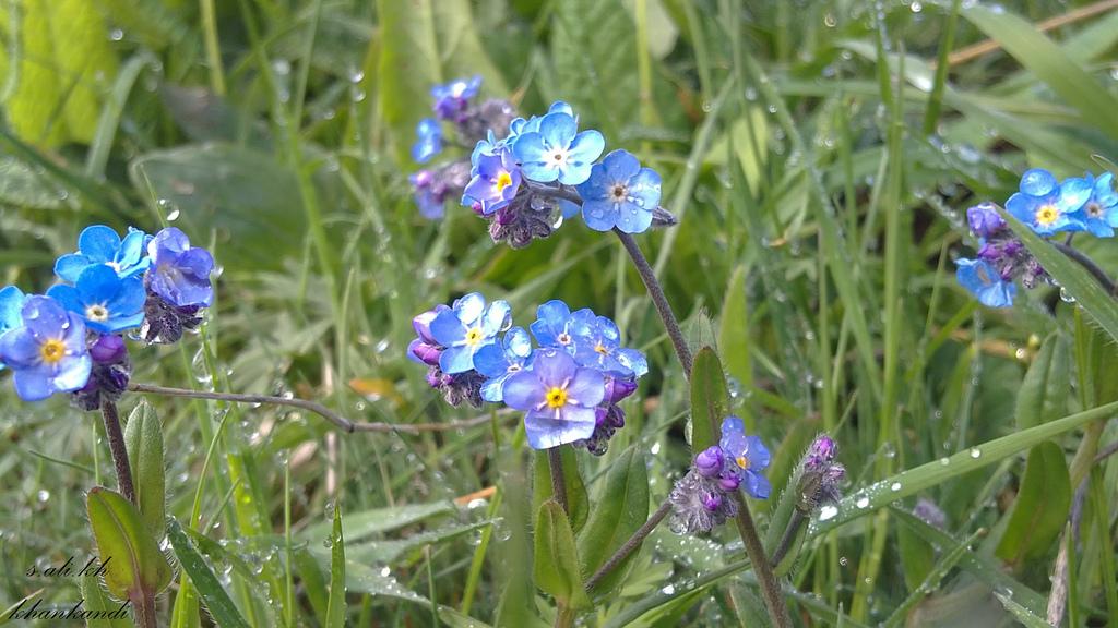طبیعت گلهای آسمانی خان کندی
