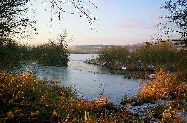 Loch of Kinnordy (near Northmuir), January 8th 2006 (14-22-06), Scotland, United Kingdom
