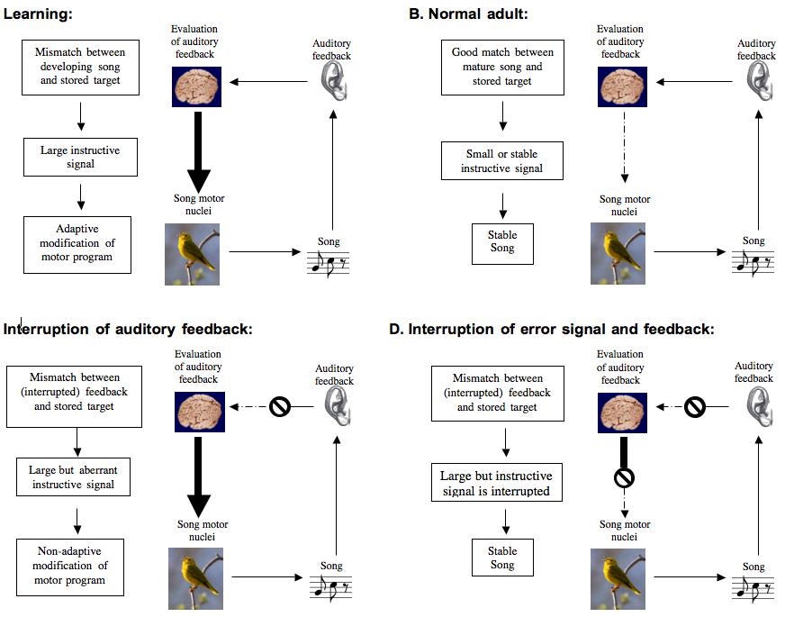 Birds, Cornell Lab of Ornithology