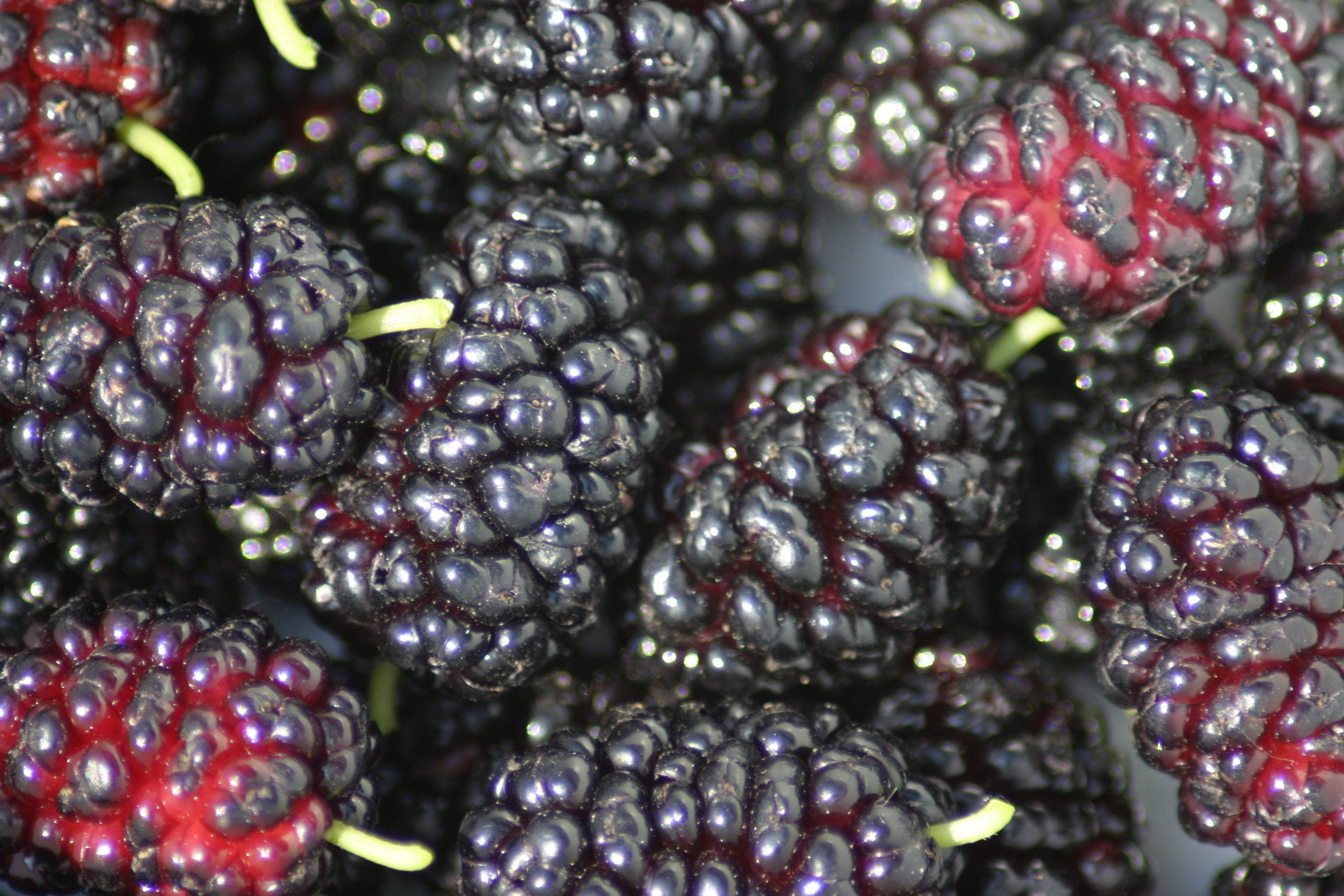 how to make stewed mulberries