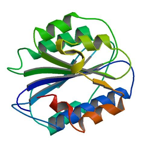 קובץ:PBB Protein VWF image.jpg