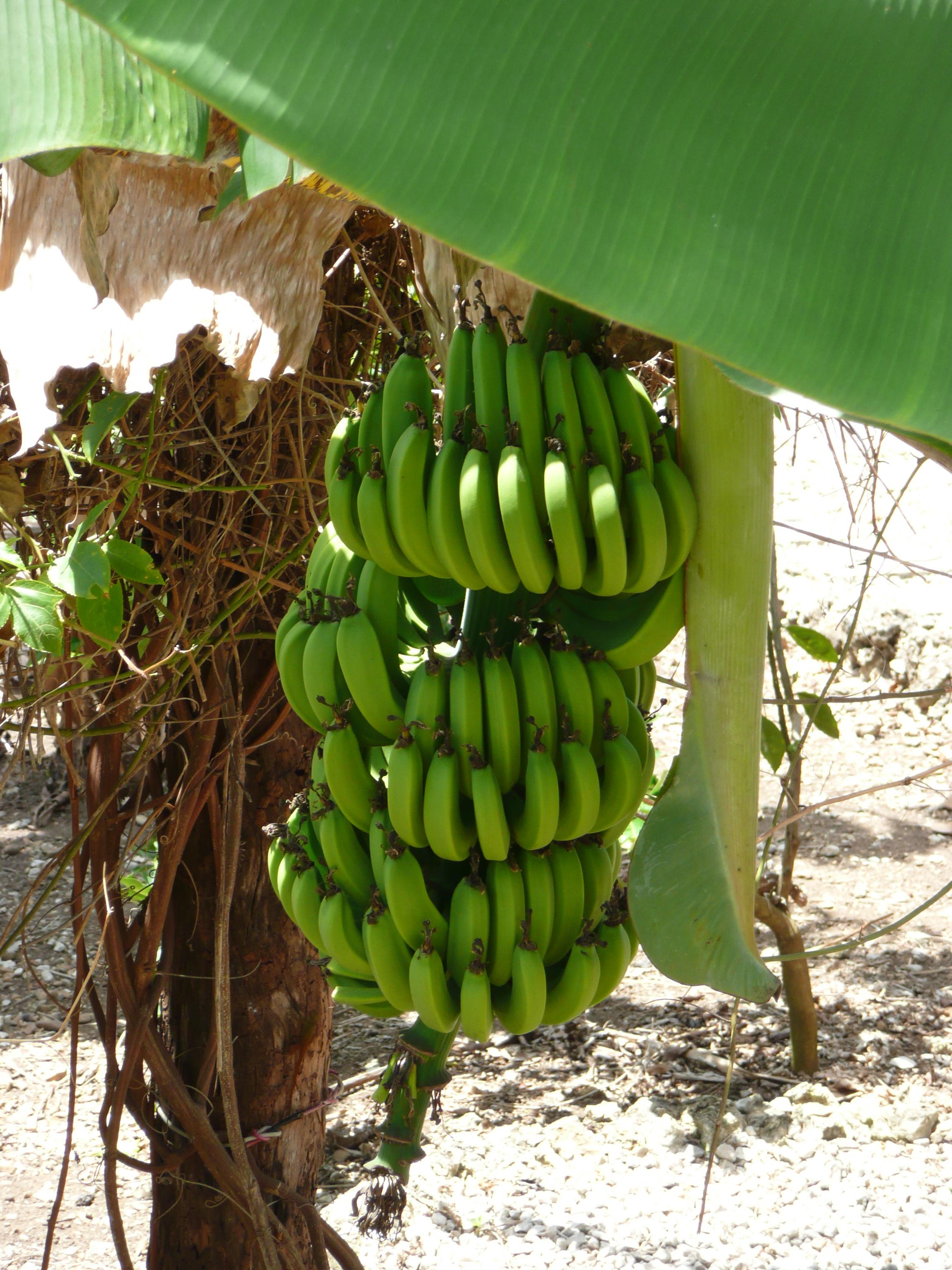 Banana Date And Walnut Cake Uk